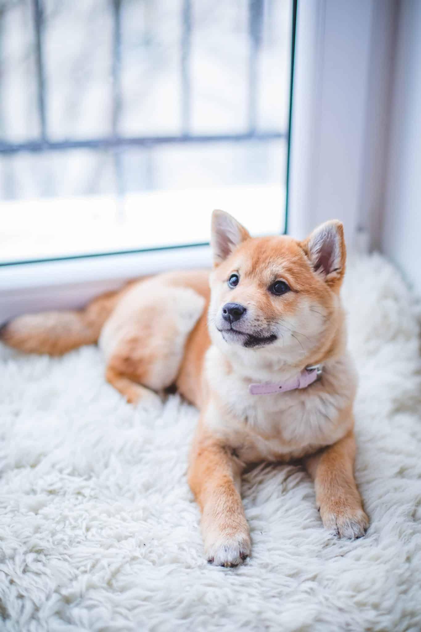 Das Vorbild, Dogs for People & Babyglück