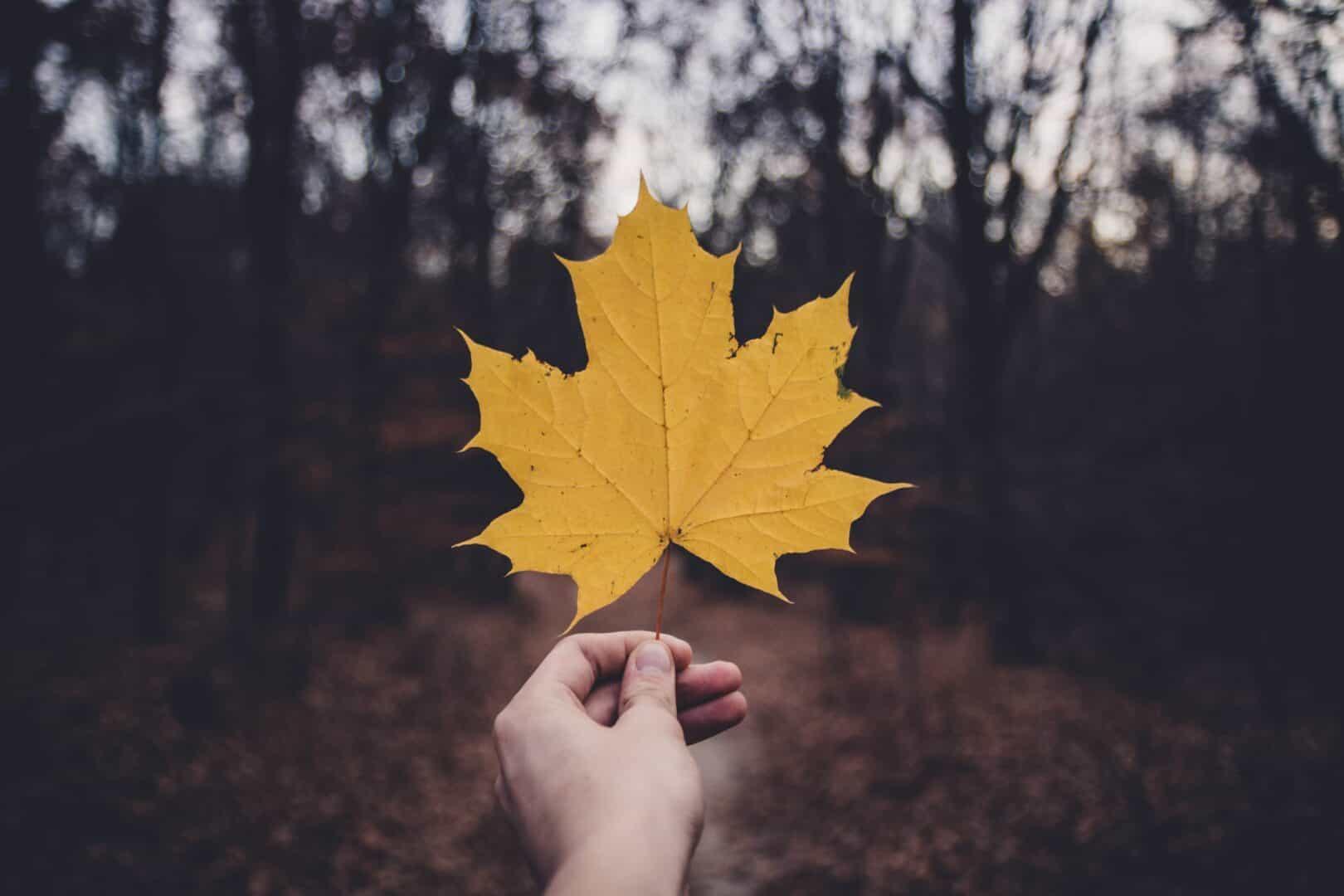 Silber Maple Leaf, die beliebteste Anlagemünze