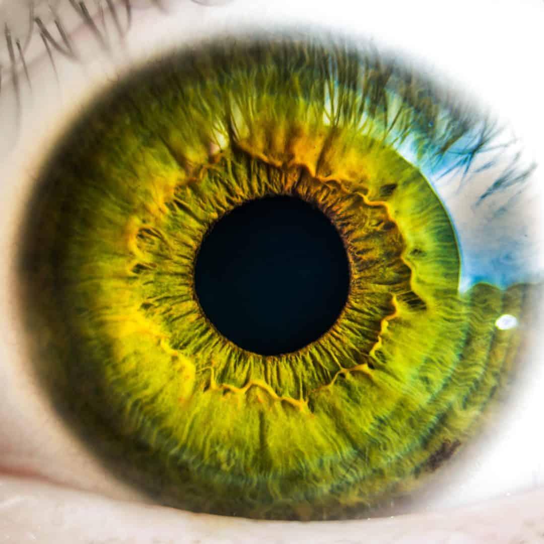 Makula- degeneration, Augenvitalität & Sehkraft