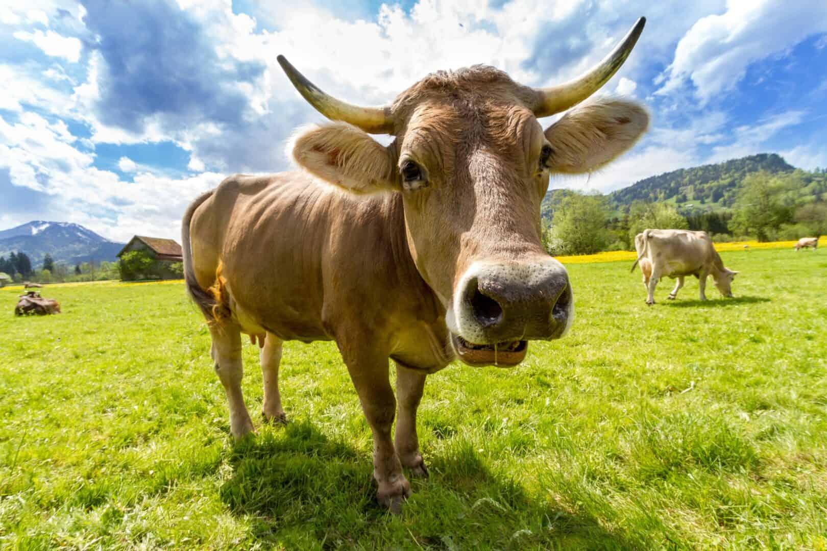 Mikrostrom-Therapie Behandlungen bei Tieren