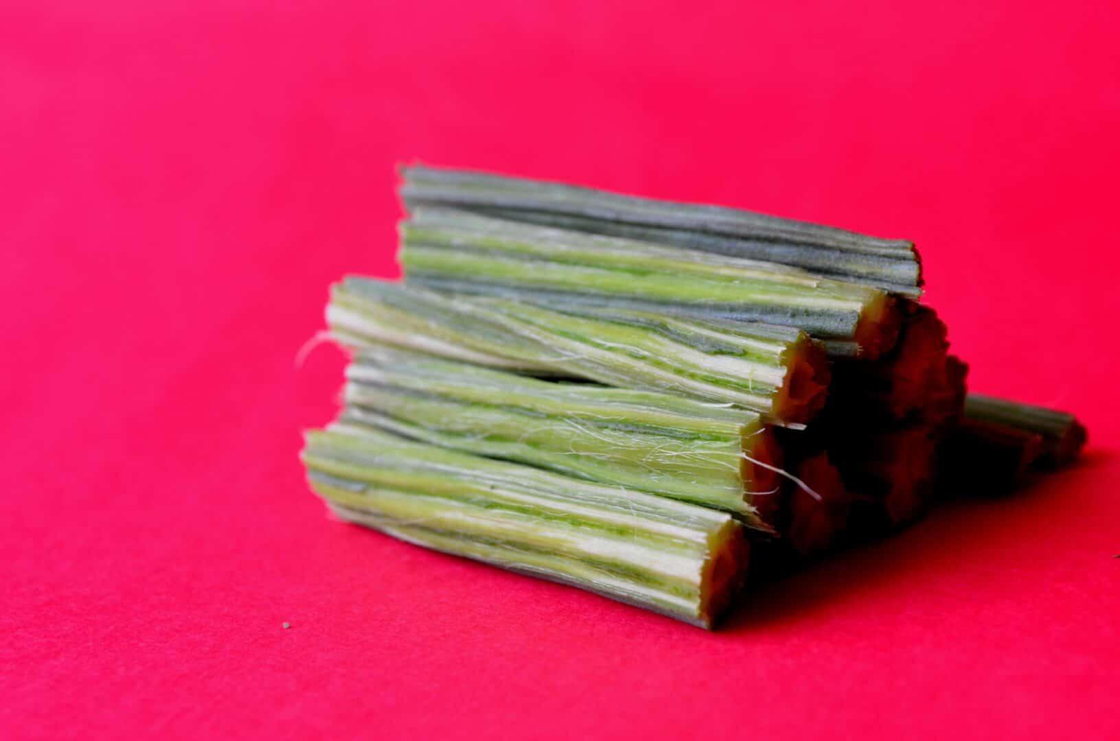 Moringa – Von Kopf bis Fuss