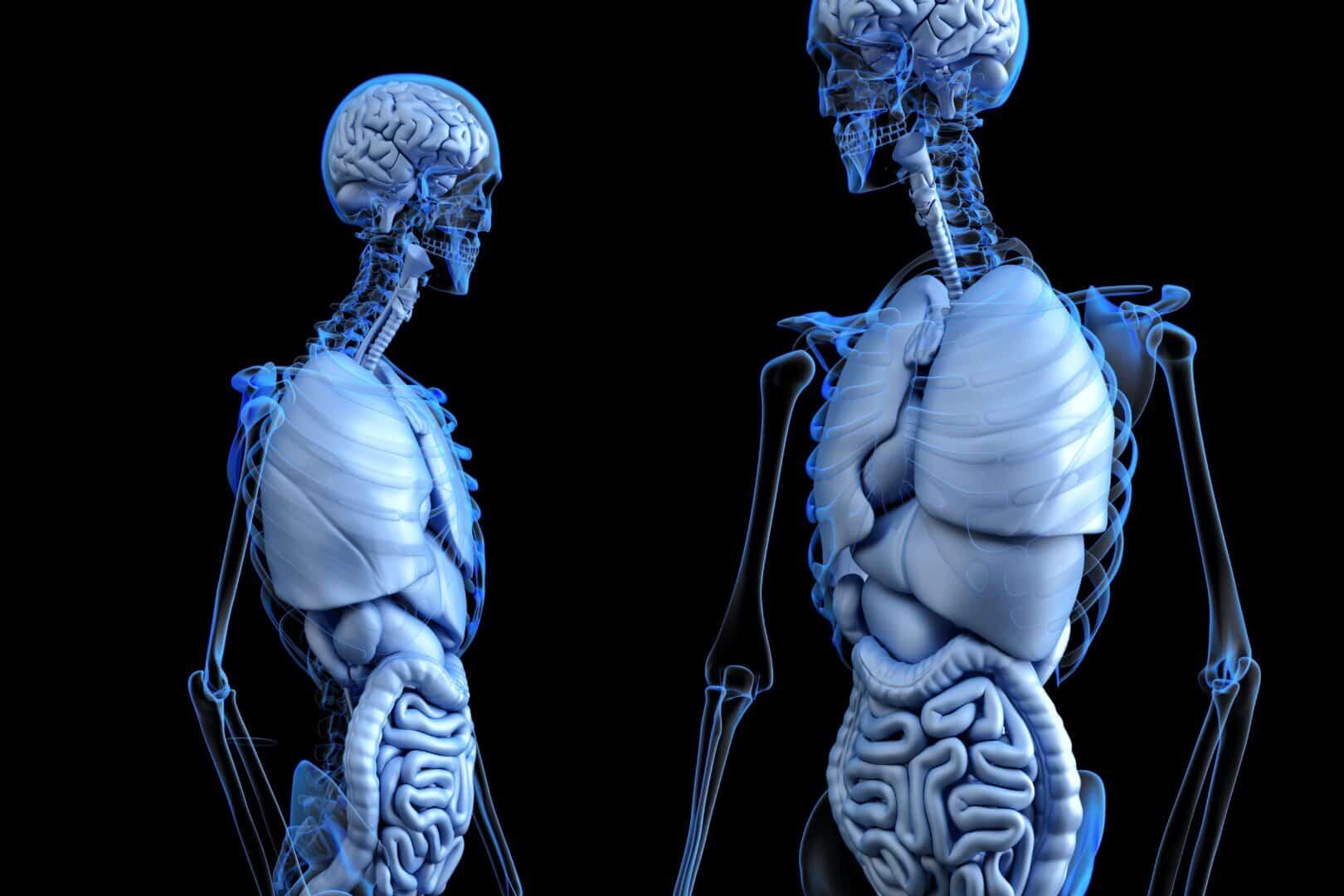 Korrekte Darmreinigung von Innen stabilisiert