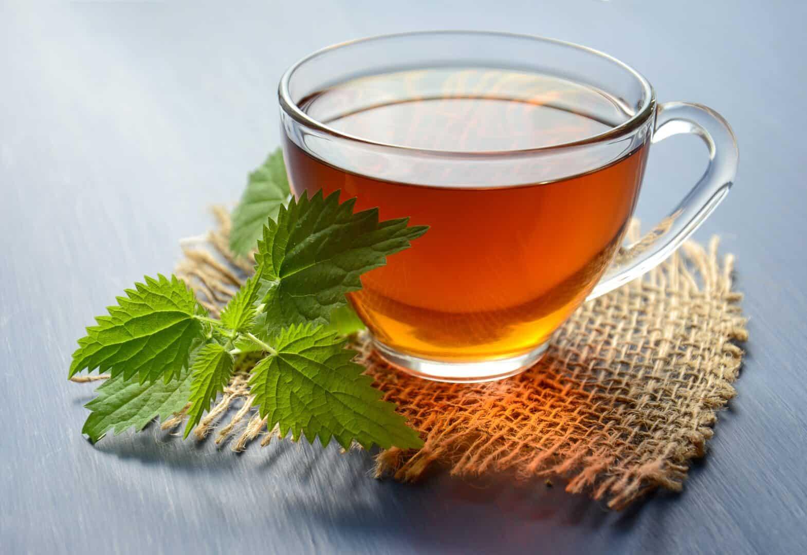 Moringa-Tee richtig zubereitet