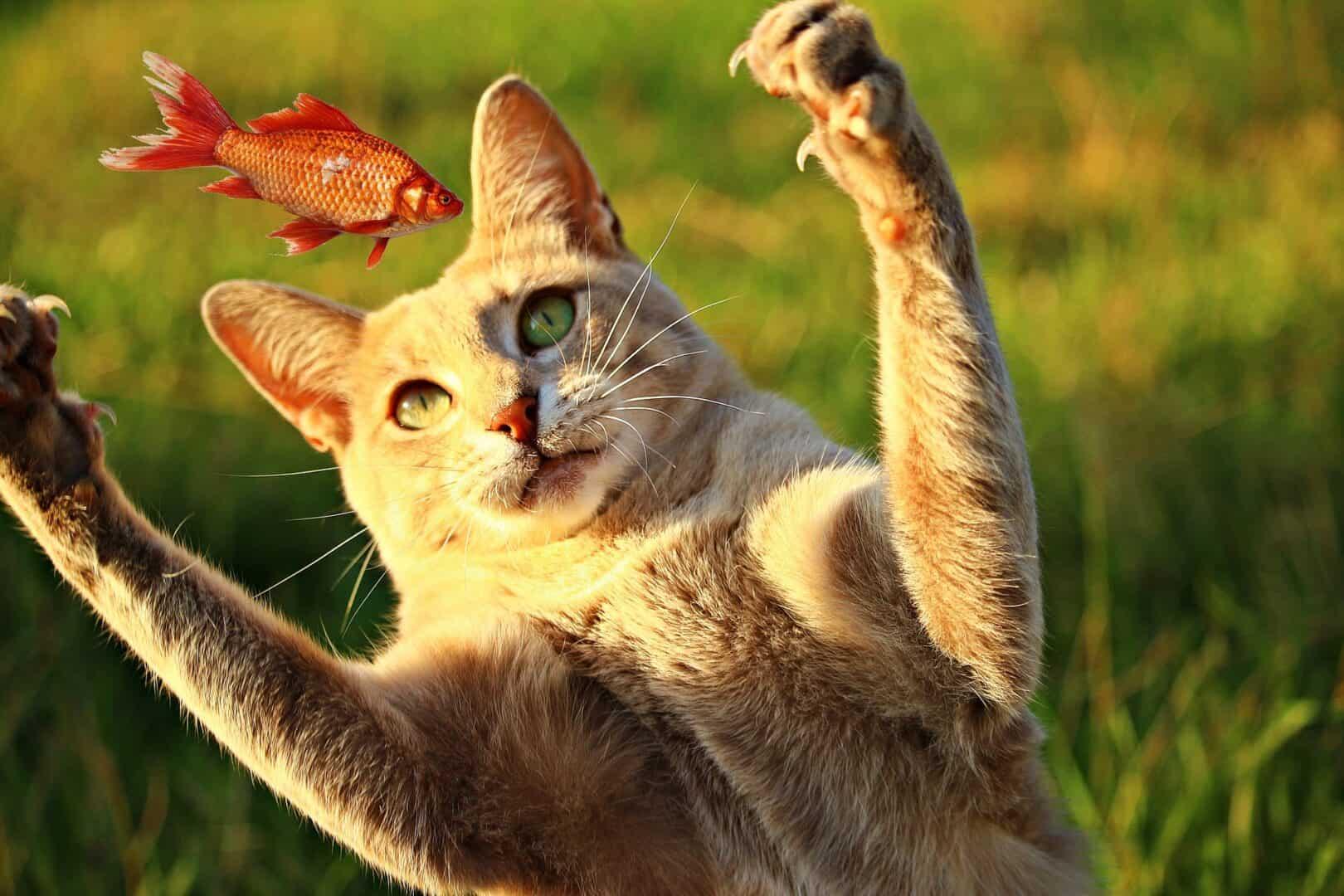Die Katze auf dem Schoss und der Fisch in der Pfanne