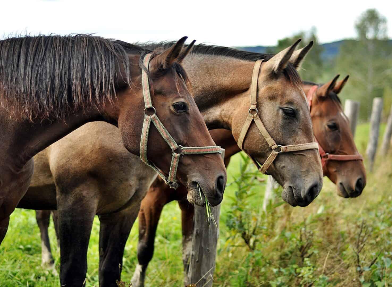 Global Animal Law GAL- geht direkt an die Wurzeln