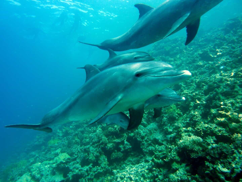 Delphintherapie ohne Delphin