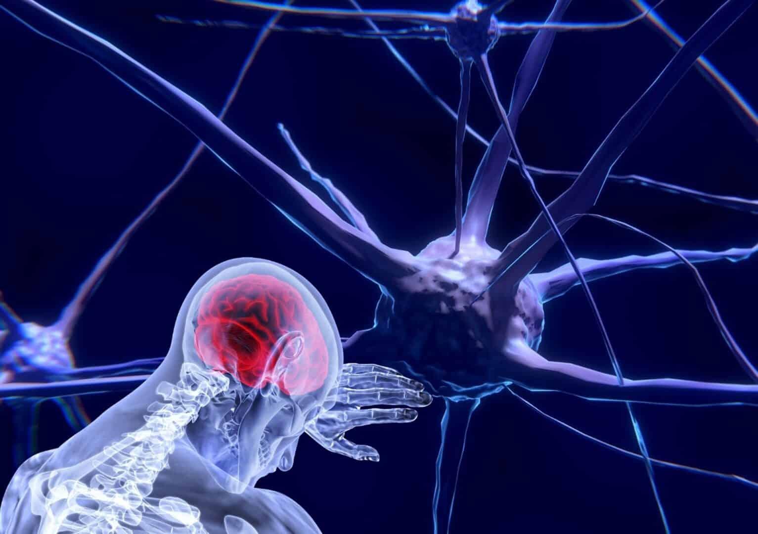 Die Digitalisierung aus dem Blick der Neurowissenschaft