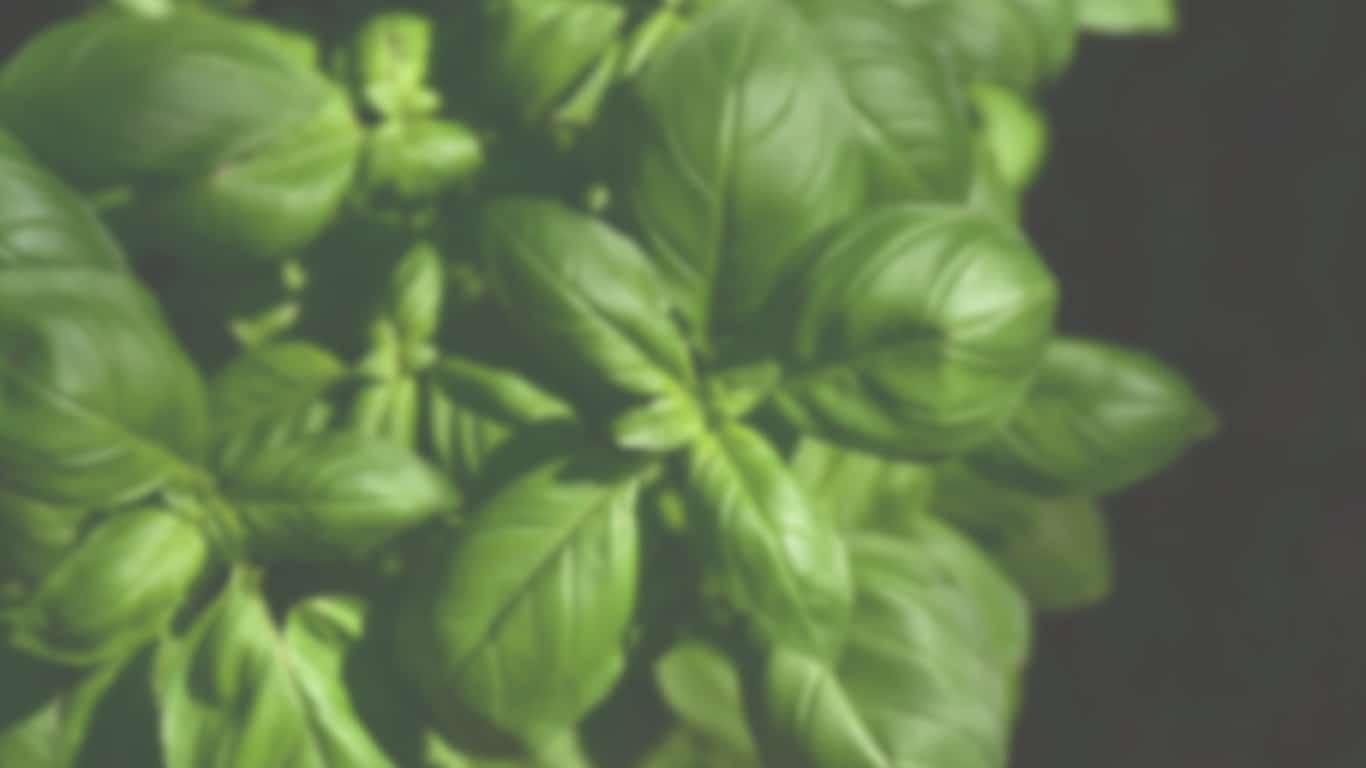 Misosuppe mit Tofustückchen, Wakame-Algen & Frühlingszwiebeln
