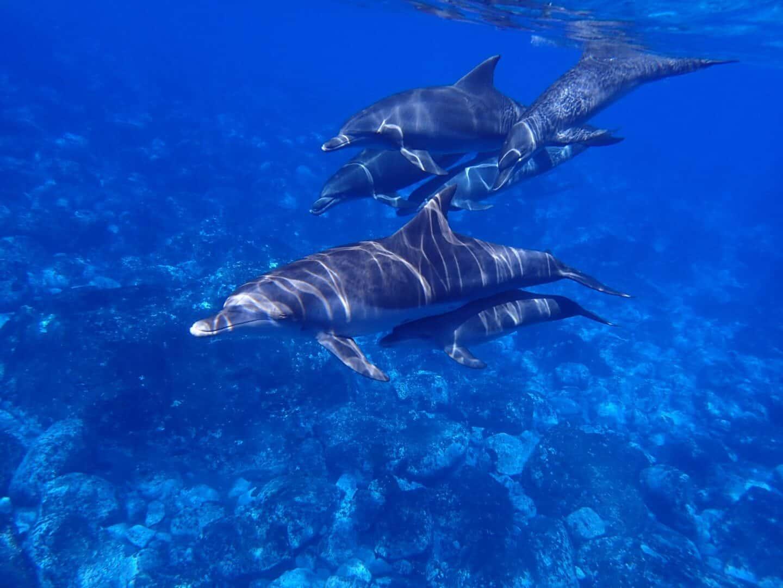 Zeitgemässe Delphintherapien und 3 Engel für Josua