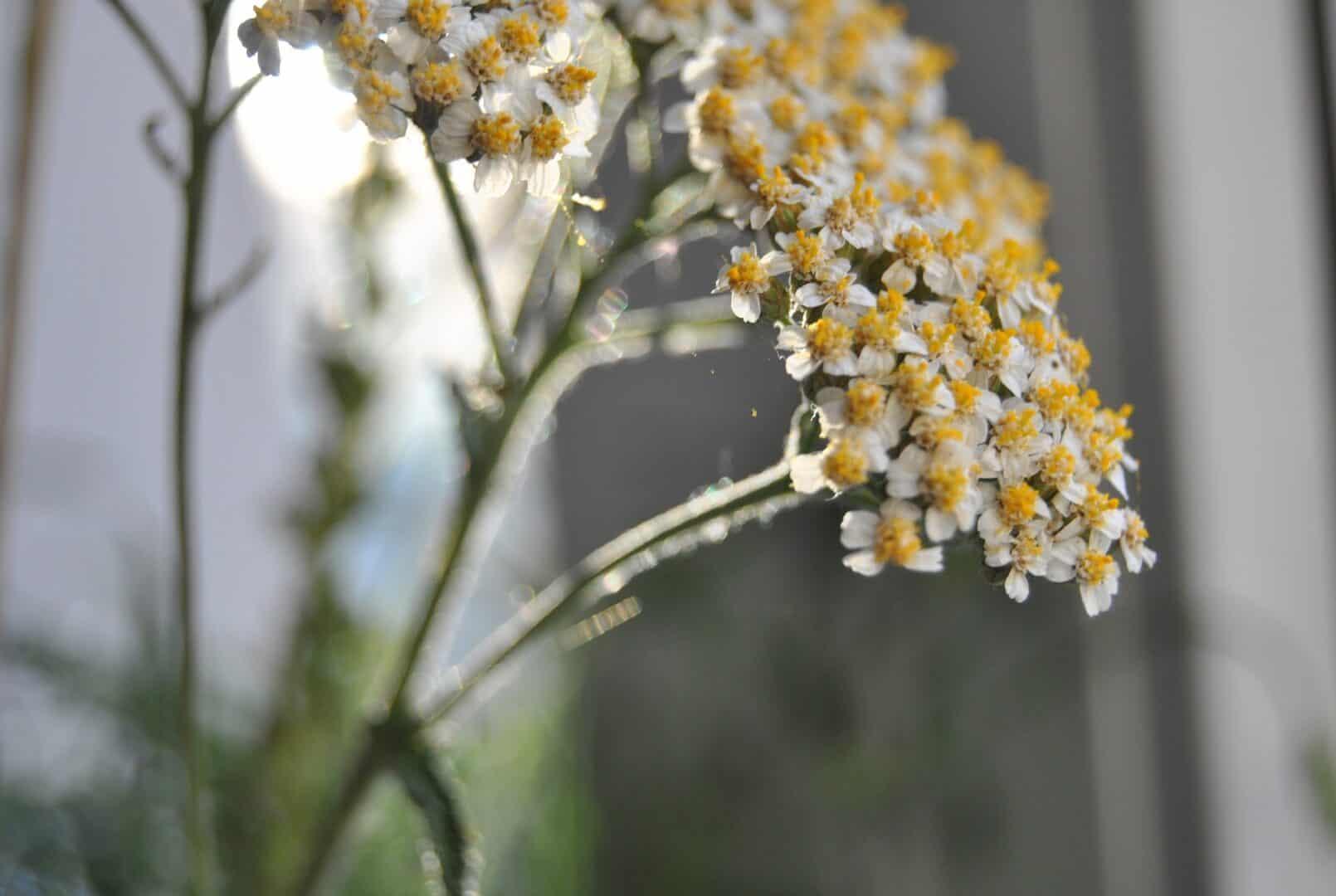 Eine Pflanze für alles – Pflanzenheilkunde